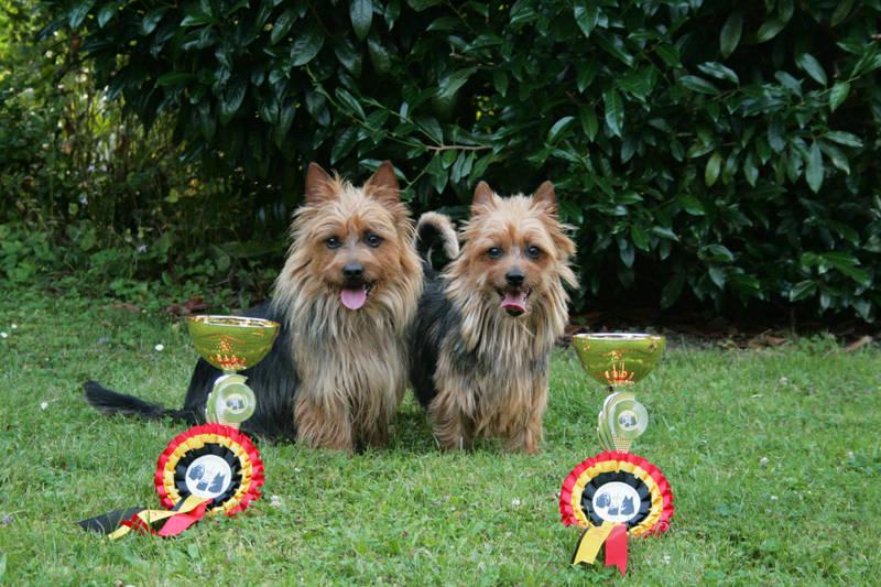 Golden Dog Trophy, Golden Winner, Terrier, Australian Terrier, Zucht,