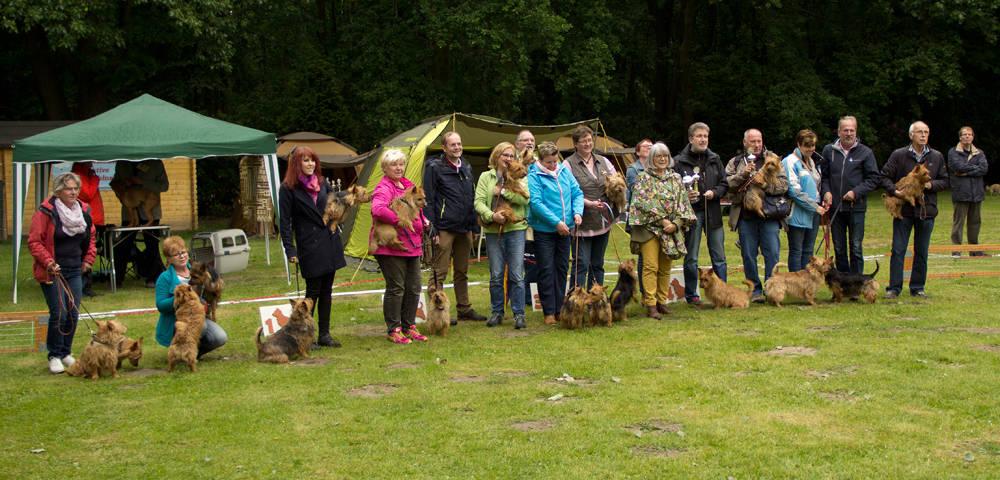 Australian Terrier Spezial 2015, Organisiert von Frau van de Sand