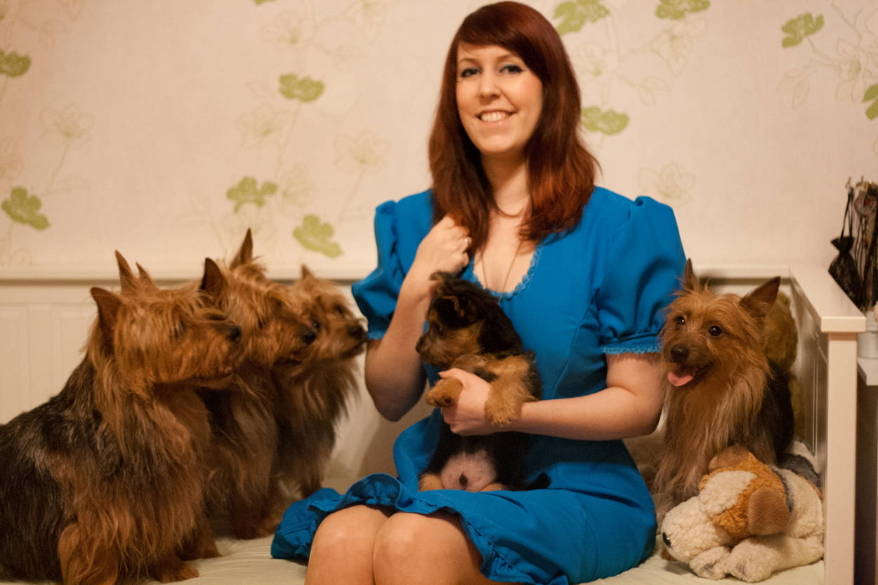 Australian Terrier, Lesnoy´s, Weihnachten,