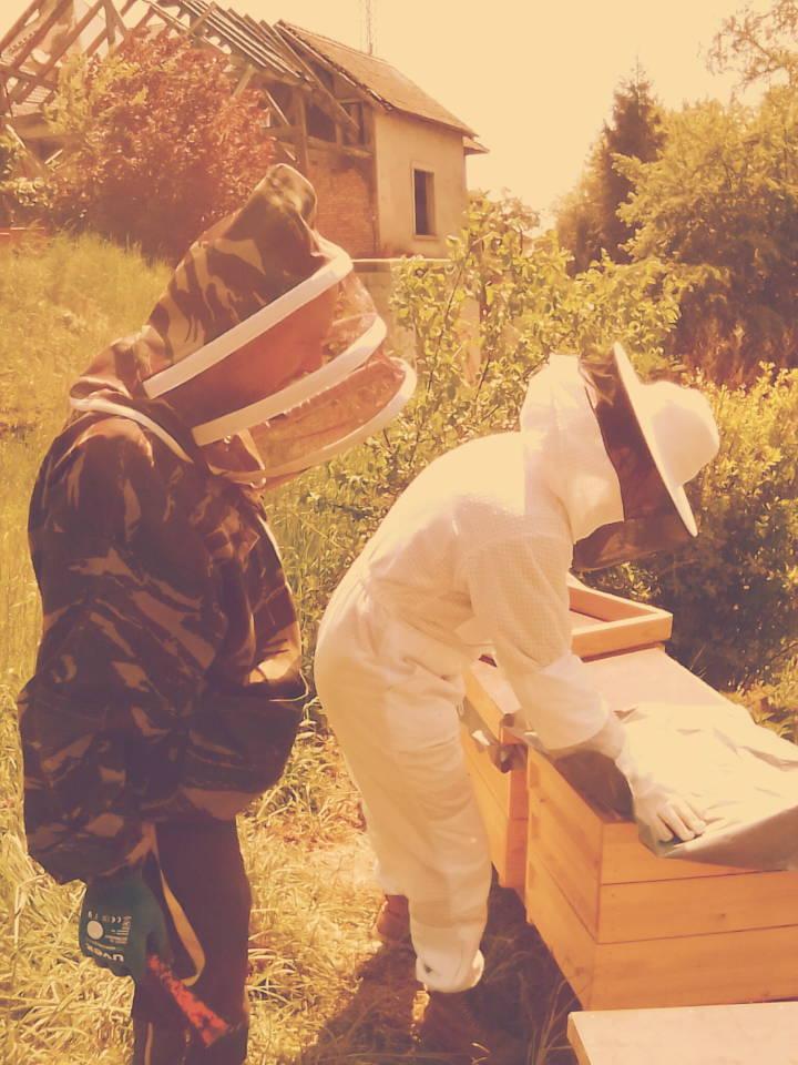 traut sich schon zu den Bienen