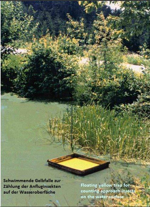 Test einer schwimmenden Gelbfalle mit dem Ziel, schwimmende Gelbfallen zur Förderung der extensiven Fischzucht einzusetzen