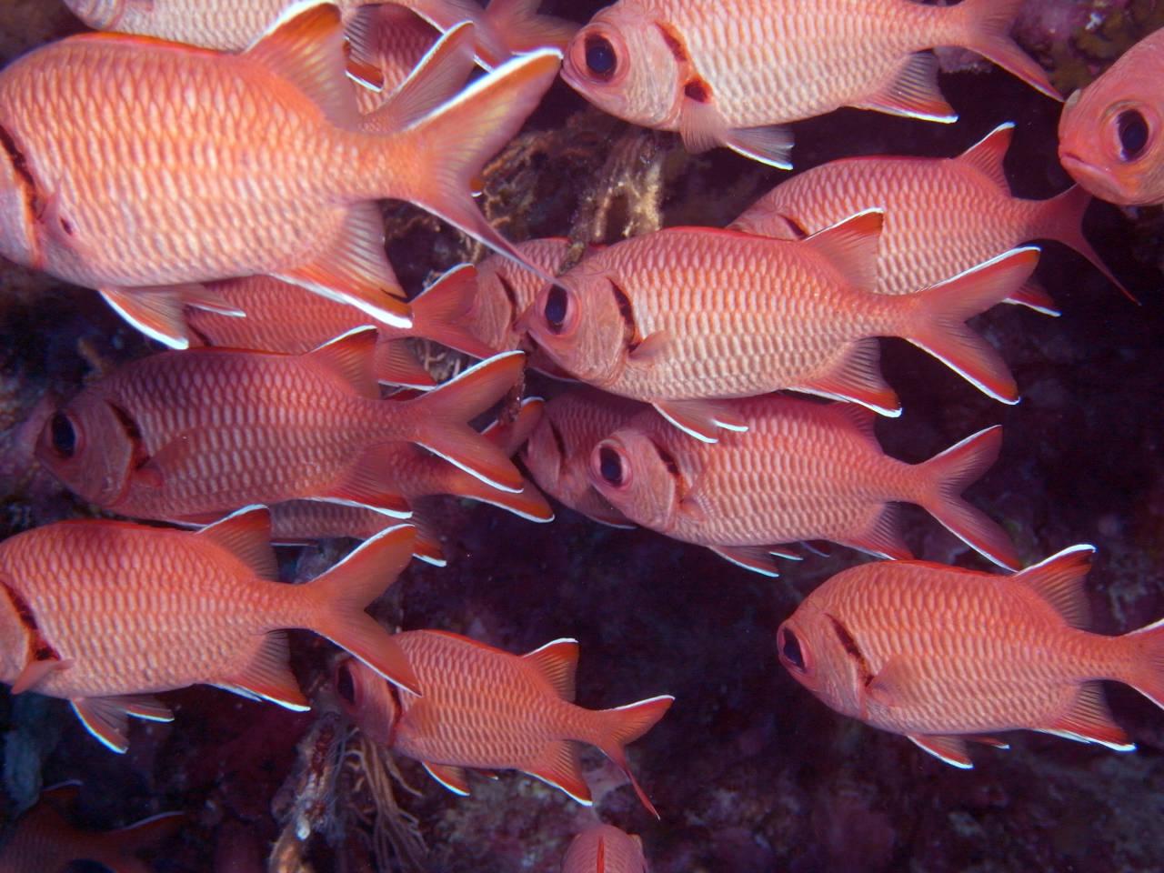 Fische beim Tauchen in Hurghada