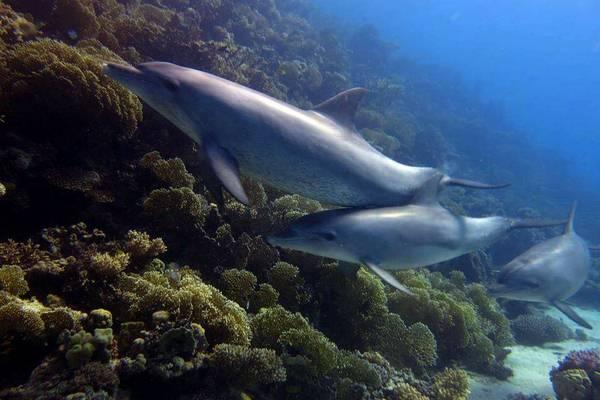 Ausflüge in Hurghada - Dolphin House Hurghada