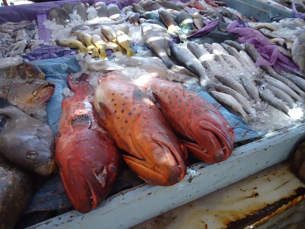 Ausflug zum Fischmarkt mit Ausflüge Hurghada