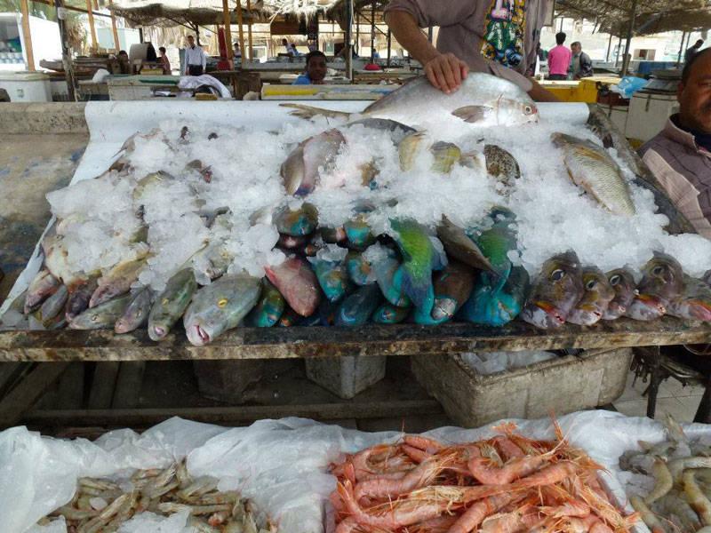 Fischmarkt Hurghada mit Ausflüge in Hurghada