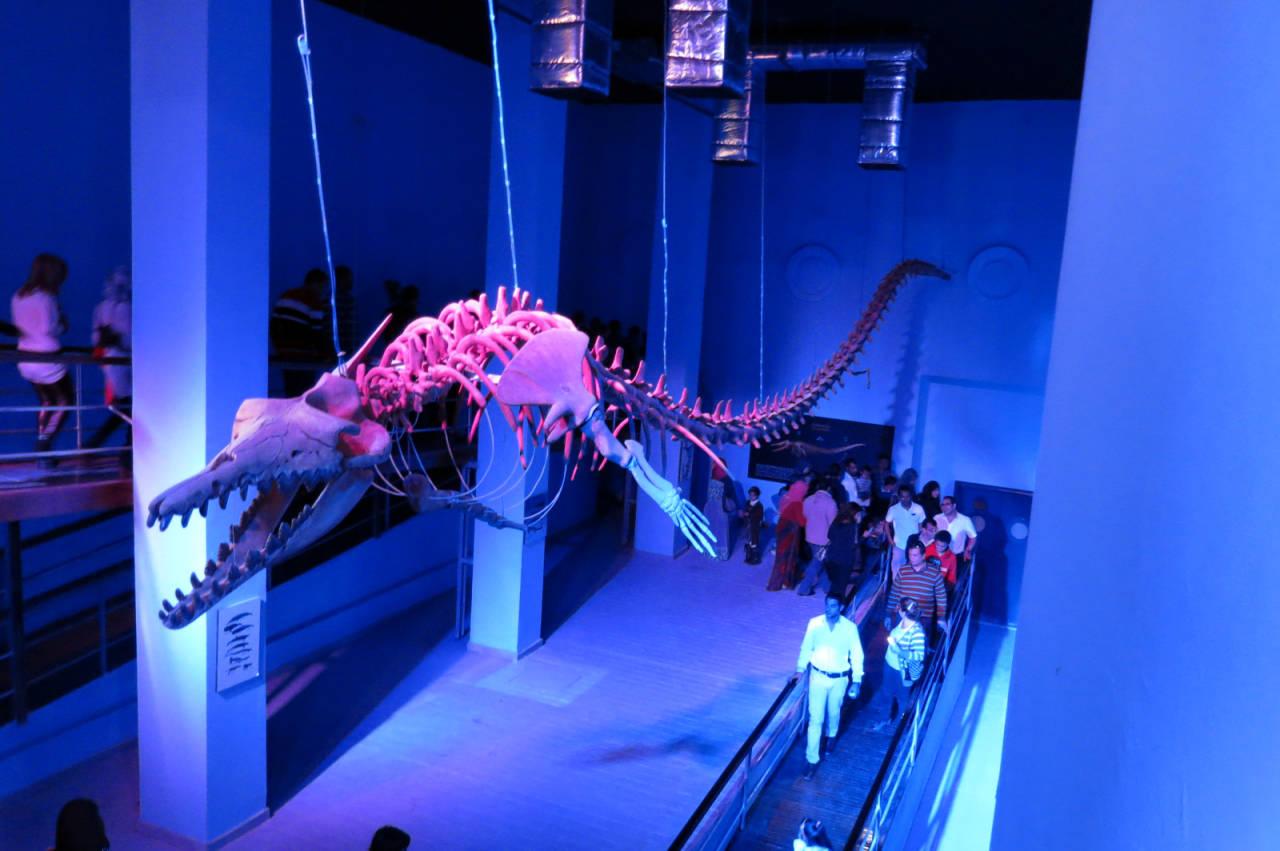 Mumifizierter Wal