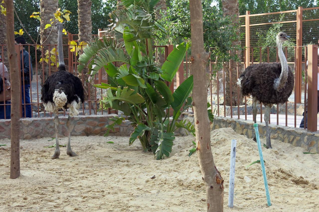 Der Zoo im Hurghada Grand Aquarium