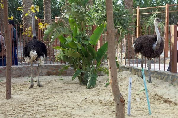 Zoo im Aquarium in Hurghada