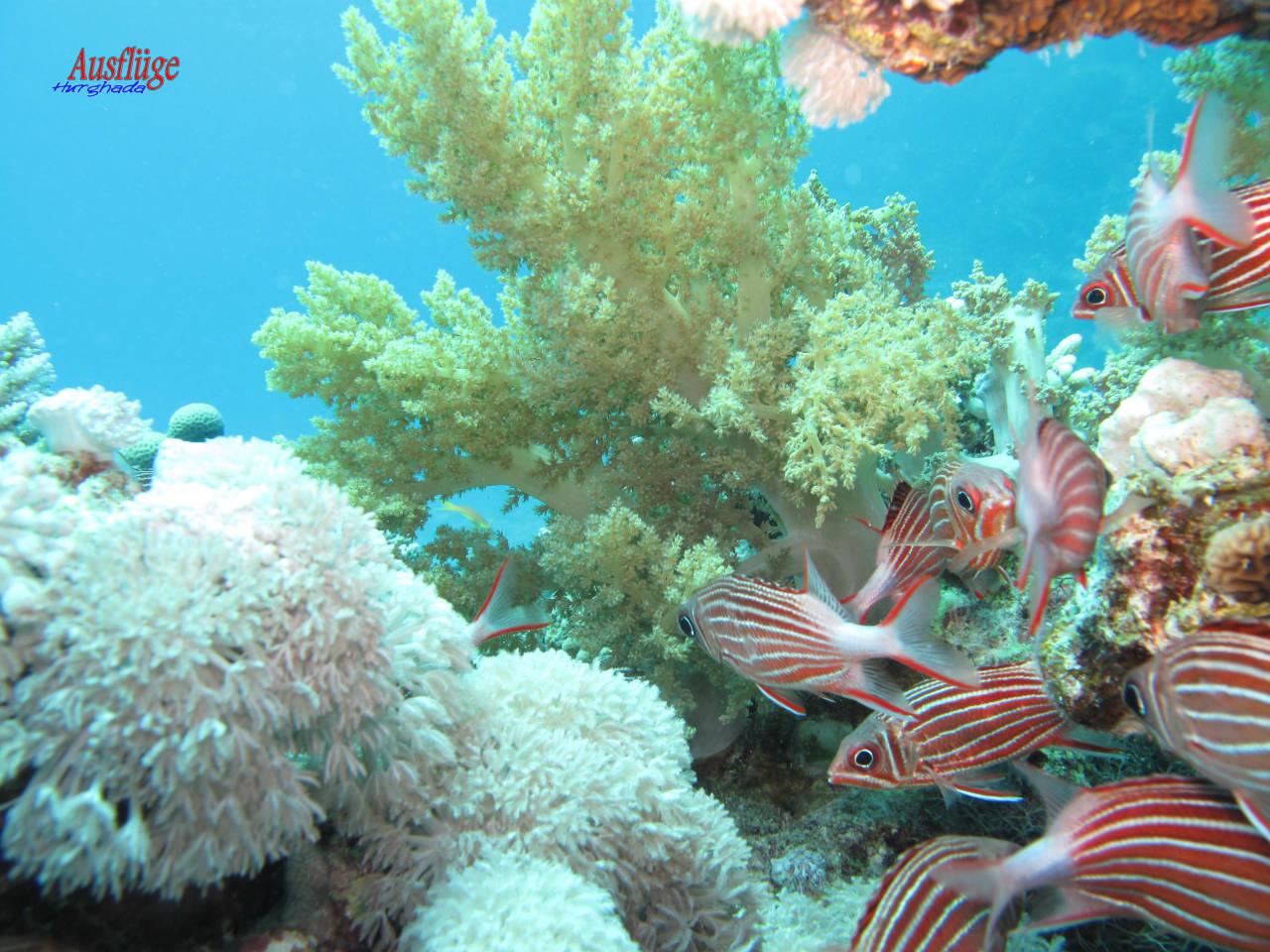 Korallenriff Hurghada