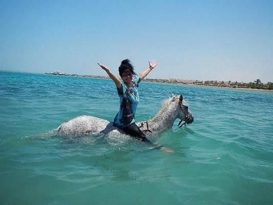 Schwimmen mit Pferd