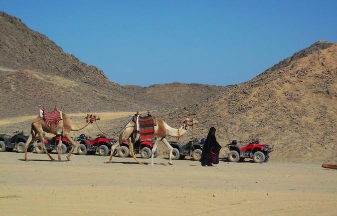 Kamelreiten bei den Beduinen in Hurghada