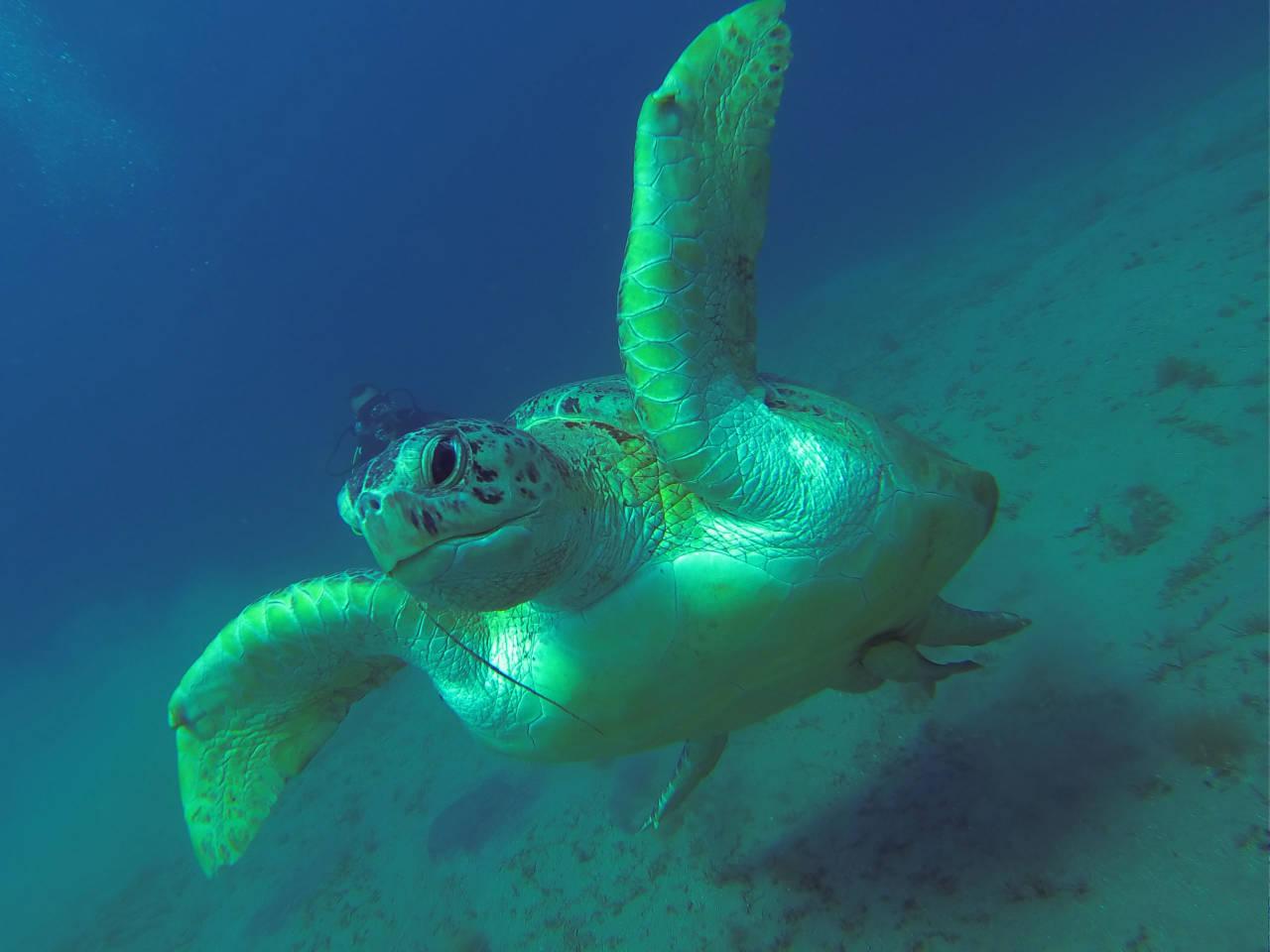 Schnorcheln mit Schildkröte in Marsa Alam