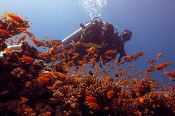 Tauchkurs Hurghada