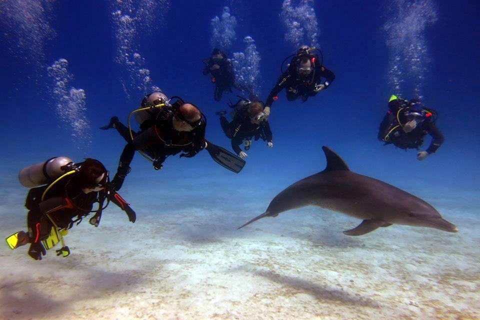 Tauchen mit Delphine
