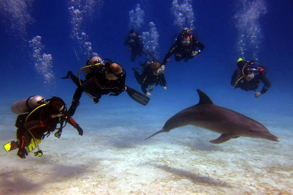 Hurghada Ausflüge Delfine