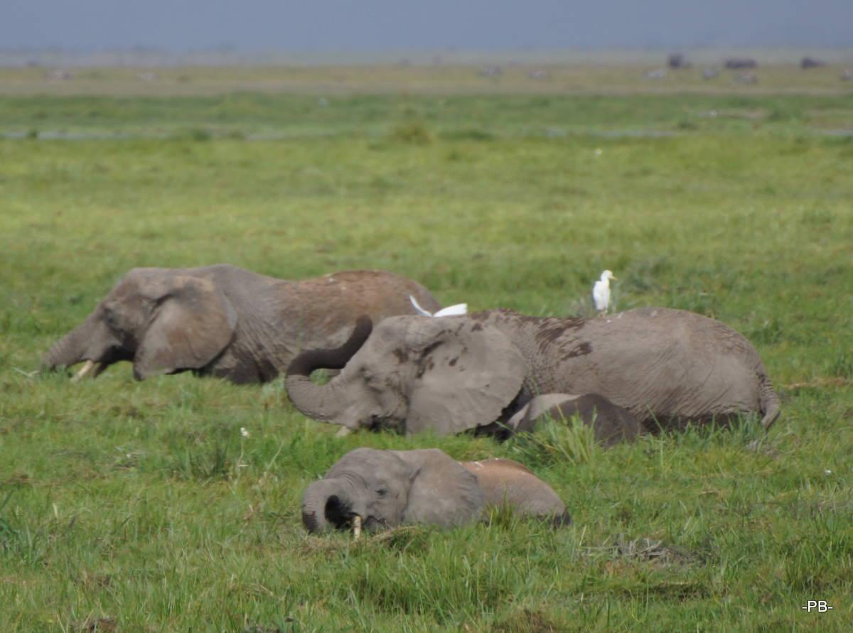Tiefergelegte Elefanten
