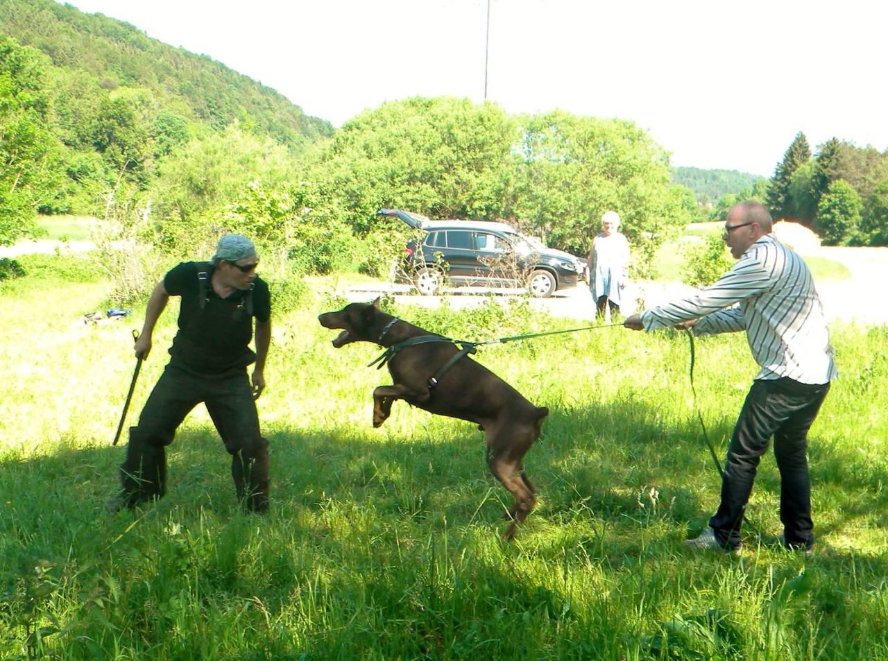 hund extremer jagdtrieb