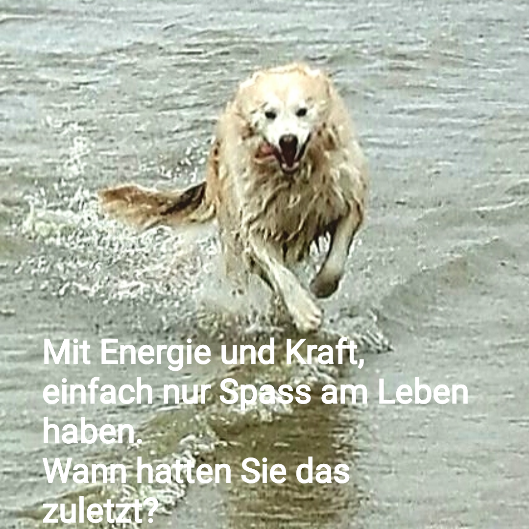 Energie und Vitalität wie ein fröhliches Tier