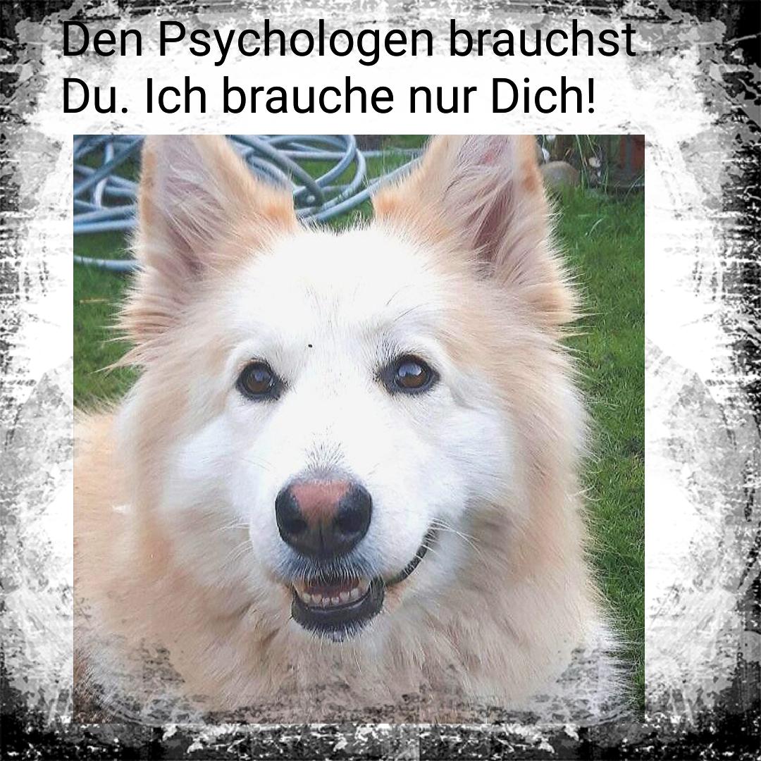 Tierpsychologie für Menschen