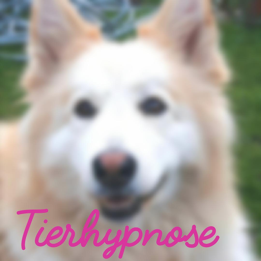 Tierpsychologie und Hypnose