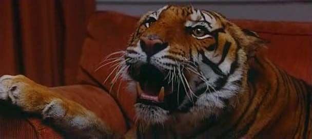 Main Hun Naa Shaiwal Tiger