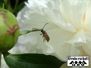 Insekt; Foto der Bruderschaft Herzberg