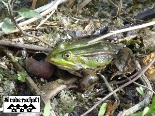 Frosch - rena; Foto der Bruderschaft Herzberg