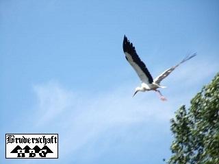 Storch - ciconiidae; Foto der Bruderschaft Herzberg