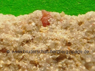 Quarzsandstein mit Rosa Apatit - vergrößert - Foto der Bruderschaft Herzberg