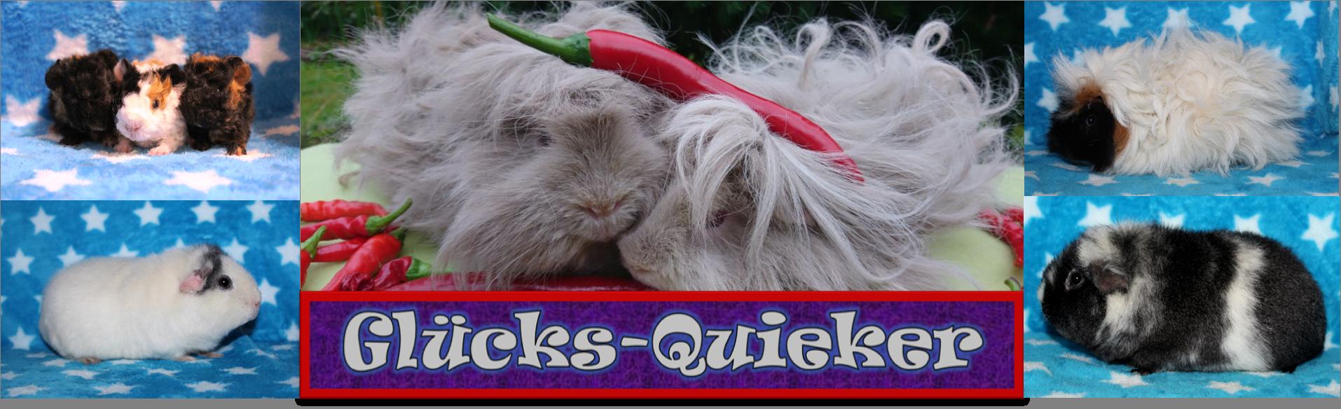 Meerschweinchen von den Glücks-Quiekern