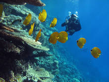 Padi course Hurghada