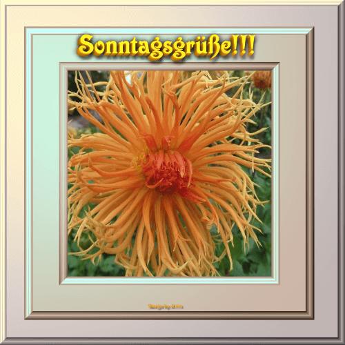 An den Beitrag angehängtes Bild: http://file2.hpage.com/014804/15/bilder/sonntagsgruesse.png