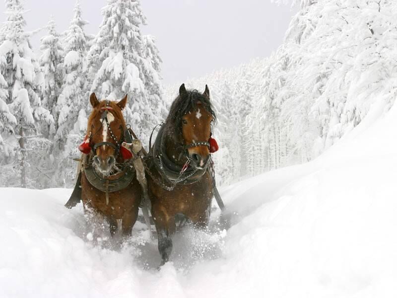 Pferdeschlittenfahrt Wagrain Winterurlaub Ski Amade