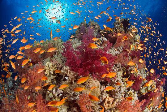 diving marsa alam